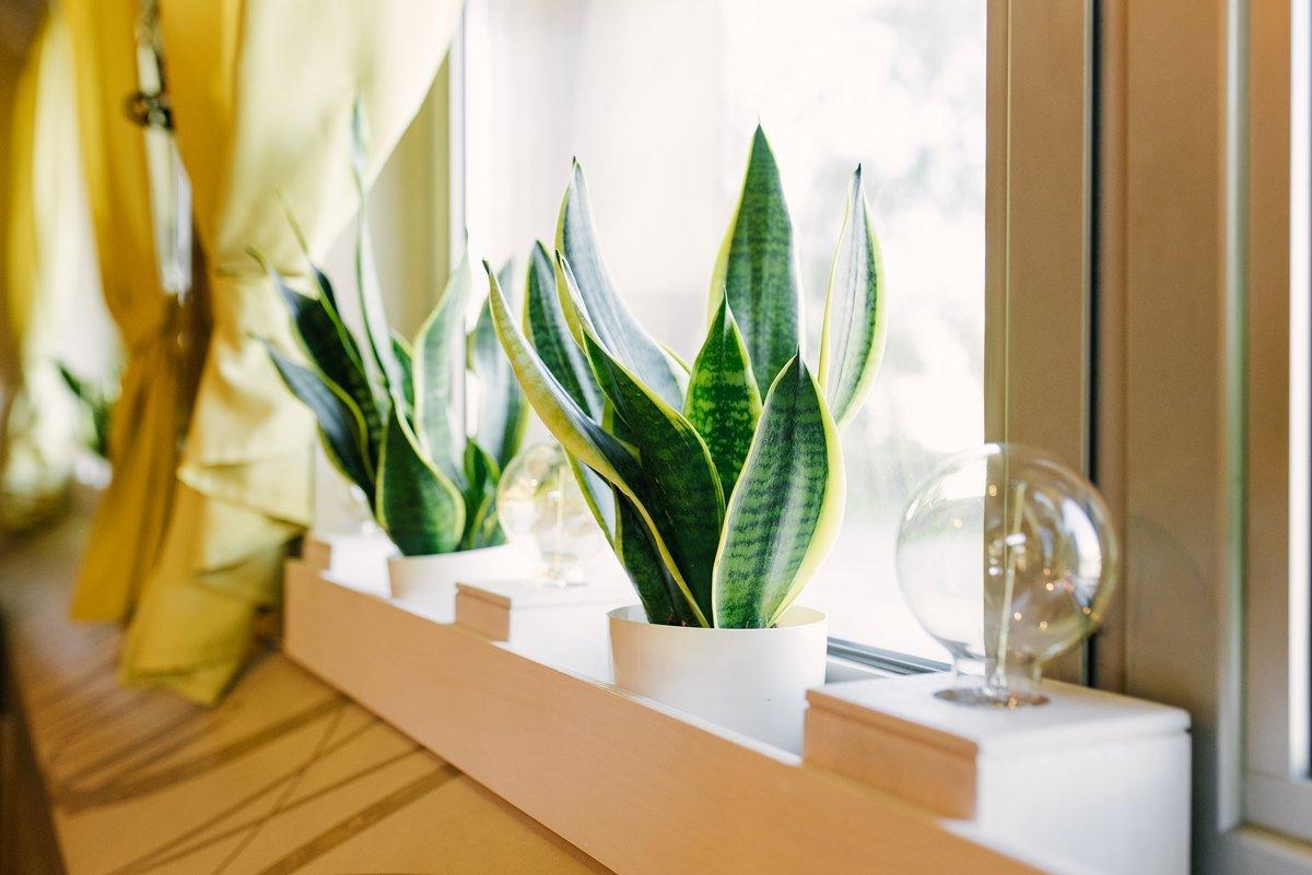 Благоприятные комнатные растения