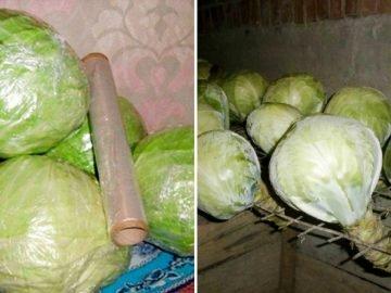 Как хранить капусту зимой