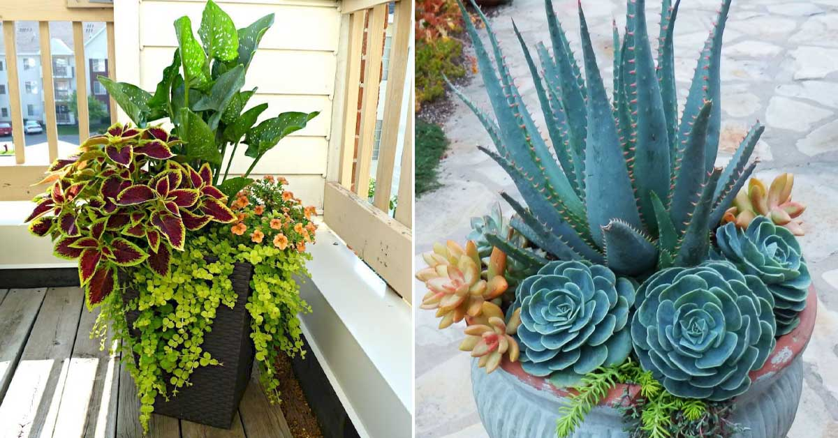 Комнатные цветы в горшках для красивого интерьера