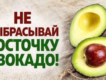 Косточка плодов авокадо