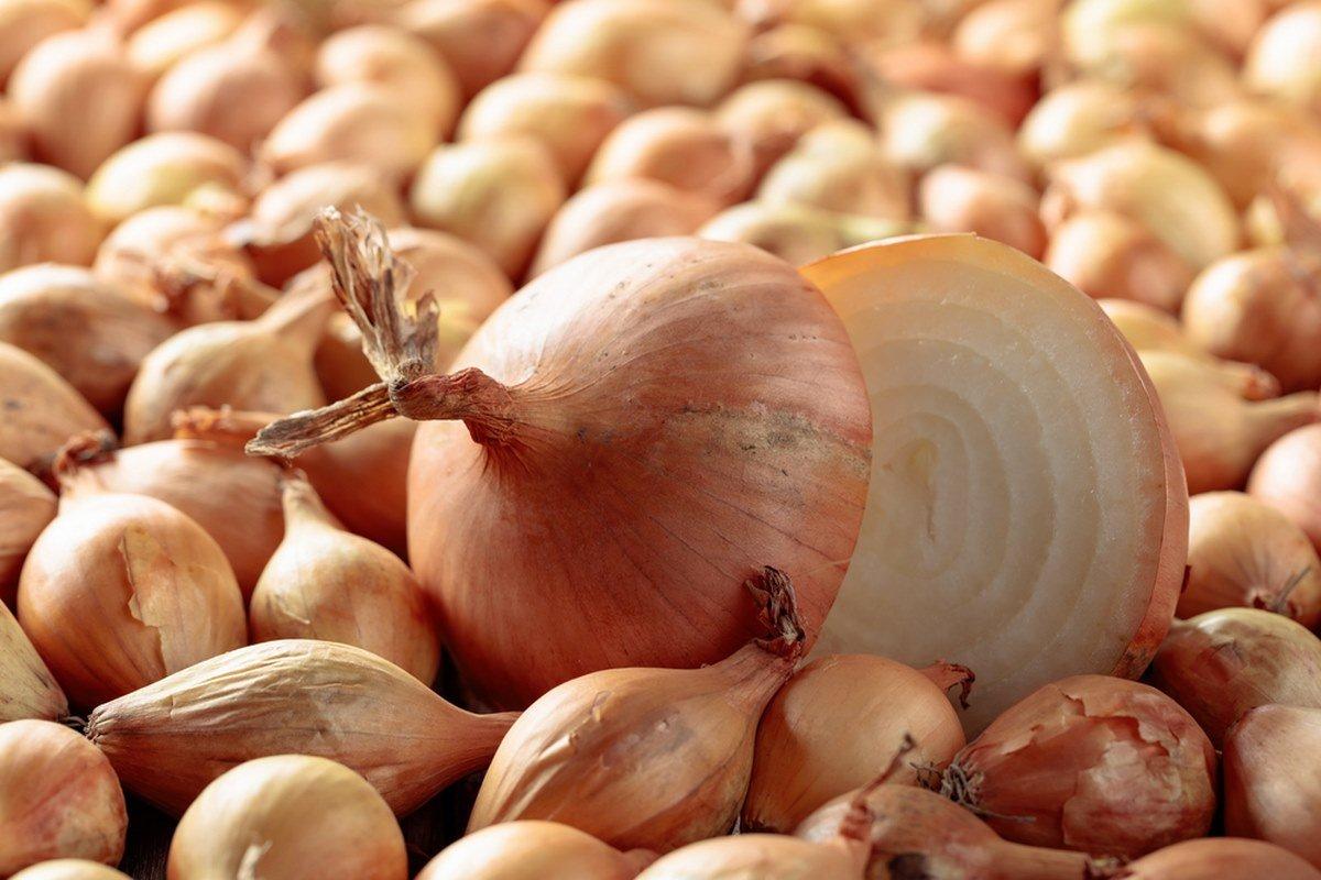 Применение луковой шелухи